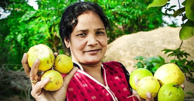 Cultura Pregunta Trivia: ¿Cuál es la fruta nacional de la India?