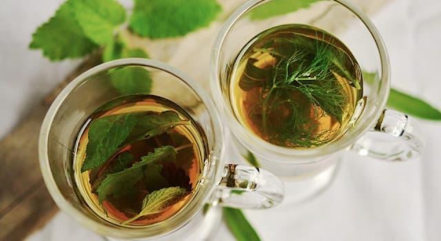 История Вопрос: Где был создан первый в истории трактат о чае и чаепитии?