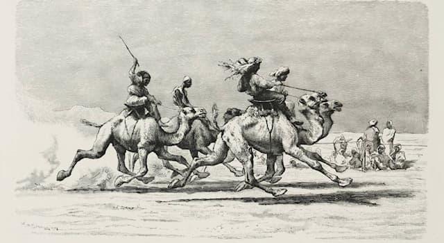 Спорт Вопрос: Где до середины 20 века были распространены скачки на верблюдах?
