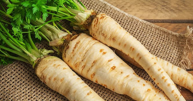 Nature Trivia Question: What vegetable is depicted in the picture?