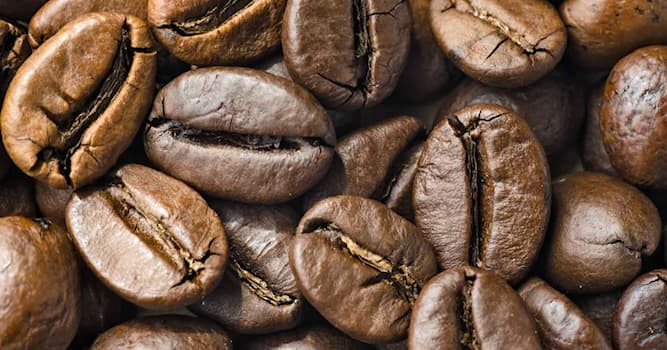Culture Trivia Question: What is the name of the third most popular species of coffee after Arabica and Robusta?