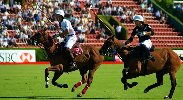 Спорт Вопрос: Как называются лошади, на которых играют в конное поло?