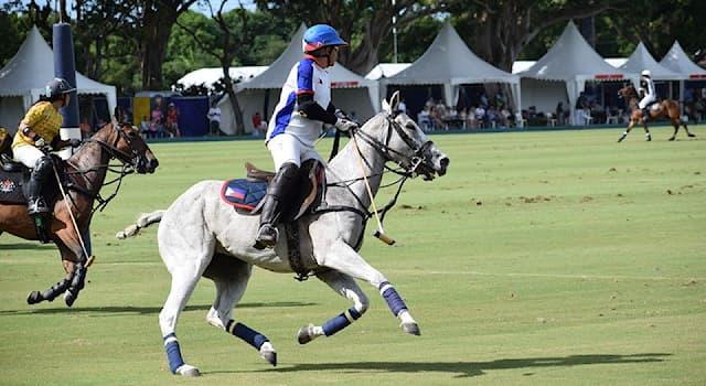 Спорт Вопрос: Как перемещаются судьи по полю во время матча по конному поло на открытом воздухе?