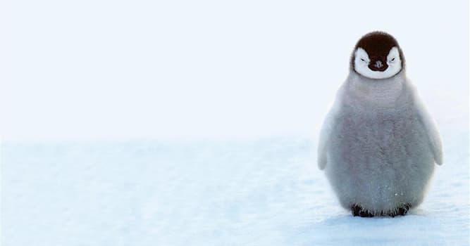"""Кино Вопрос: Как зовут подружку Лоло в мультфильме """"Приключения пингвиненка Лоло""""?"""