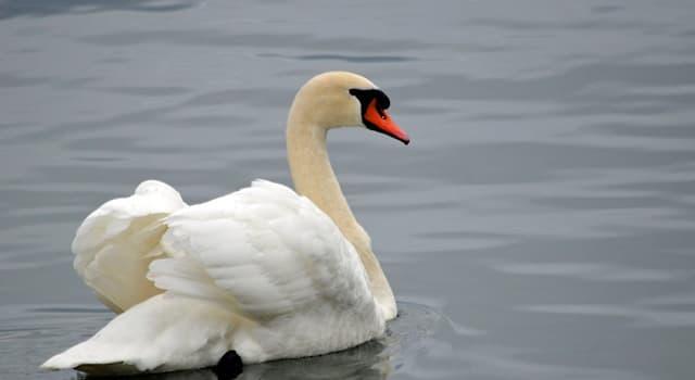 Культура Вопрос: Какая птица является национальной птицей Дании?