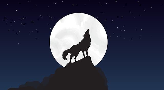 Культура Вопрос: Какой месяц у чехов раньше назывался «волчьим»?