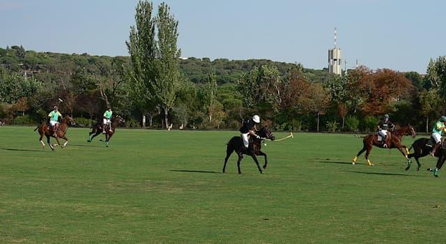 Спорт Вопрос: Какой размер игрового поля для конного поло на открытом воздухе?