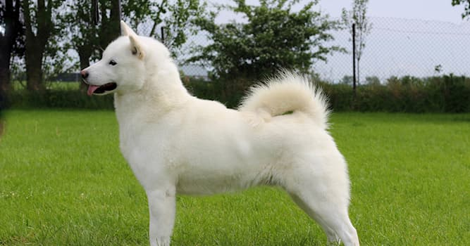 Nature Trivia Question: What type of dog breed is shown in the picture?