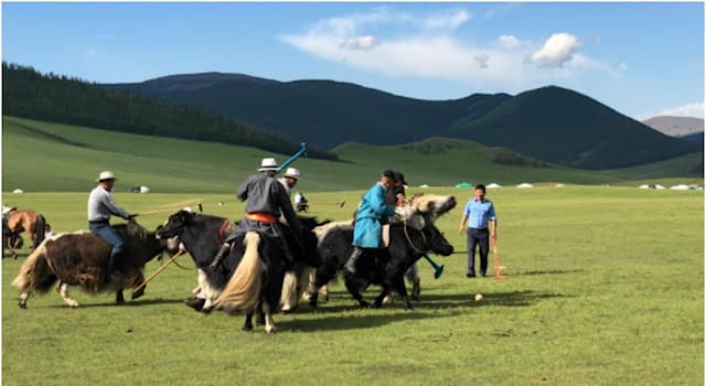 Спорт Вопрос: На каких животных играют в поло в Монголии?