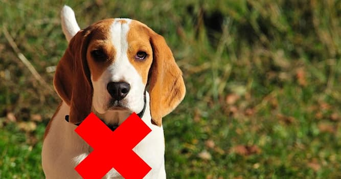 Природа Вопрос: Почему с июня 2021 года США запретили ввоз в свою страну собак из 113 стран?