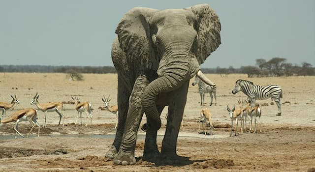 География Вопрос: В какой из стран Африки находится национальный парк по охране животных, называемый Нцкаи-Пан?