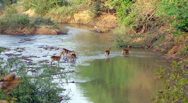 География Вопрос: В какой из стран мира находится национальный парк по охране животных, называемый Арли?