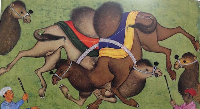 Sport Trivia Question: Camel wrestling is a sport in which country?