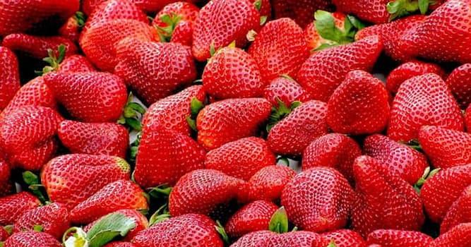 Природа Вопрос: В каком плоде содержится больше сахара, чем в клубнике?
