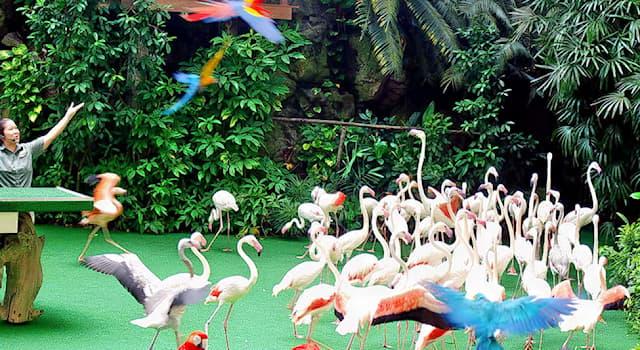 Природа Вопрос: Где находится парк птиц Джуронг?