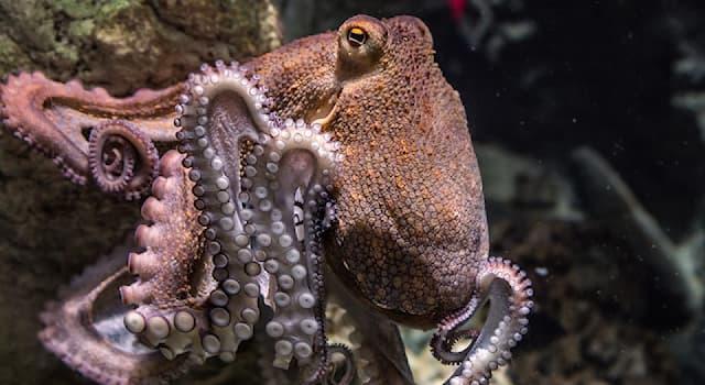 Наука Вопрос: Как называется наука, изучающая осьминогов и других головоногих моллюсков?
