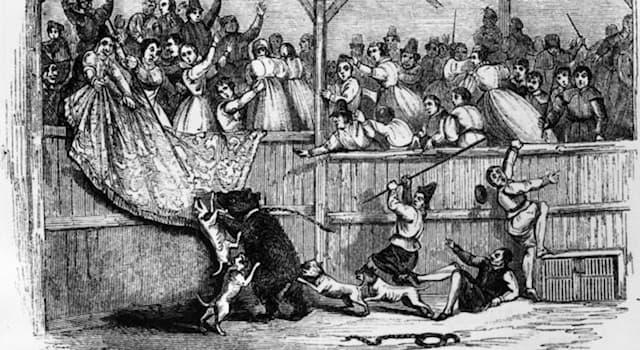 История Вопрос: Как в Англии называлась арена для травли медведя?