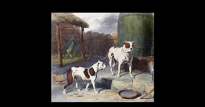 Природа Вопрос: Какая чистокровная староанглийская порода собак полностью вымерла, но в 20 веке была создана заново в США?