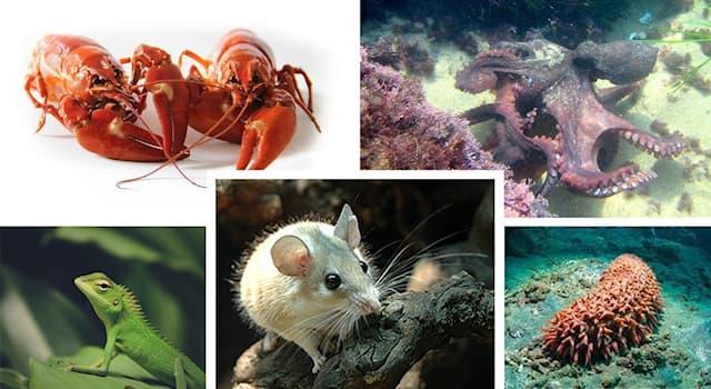 Природа Вопрос: Какая удивительная особенность объединяет ящериц, осьминогов, раков, иглистых мышей и голотурий?