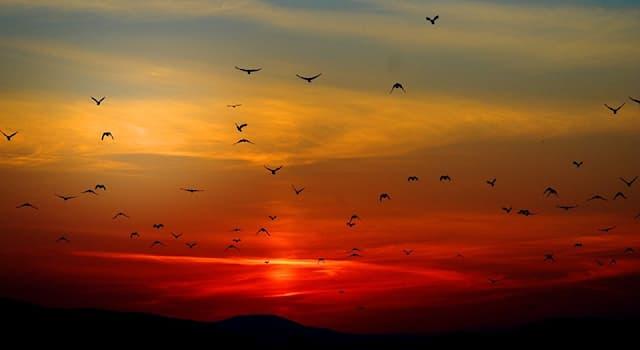 Природа Вопрос: Какие птицы из перечисленных способны более полугода летать без посадки?