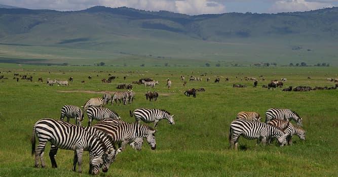 Природа Вопрос: Какое утверждение о кратере Нгоронгоро в Танзании является верным?