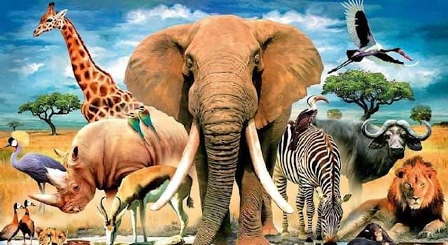 Природа Вопрос: Какое животное с древнего языка переводится как «враг, повергающий на землю»?