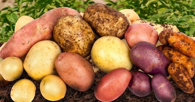 Общество Вопрос: Какой год был объявлен Международным годом картофеля по решению ООН?