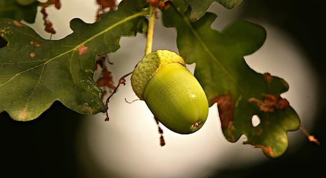 Природа Вопрос: Какой плод изображен на картинке?