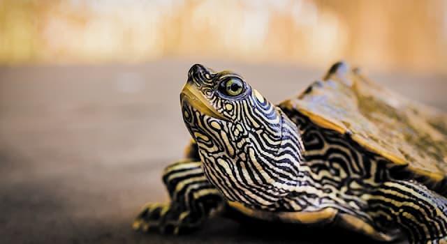 Природа Вопрос: Какова особенность кожистых черепах, черепах бисс и коробчатых черепах?