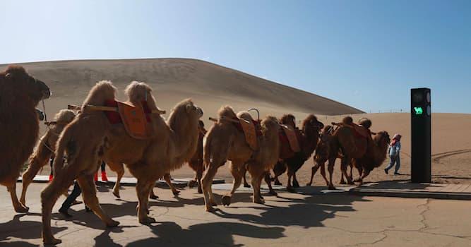 География Вопрос: Какую функцию выполняет предмет, который установили для верблюдов около горы Минша в Китае?