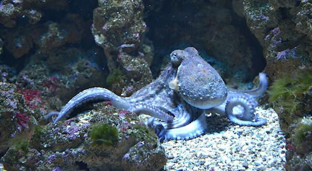 Природа Вопрос: Кем по типу питания являются осьминоги?