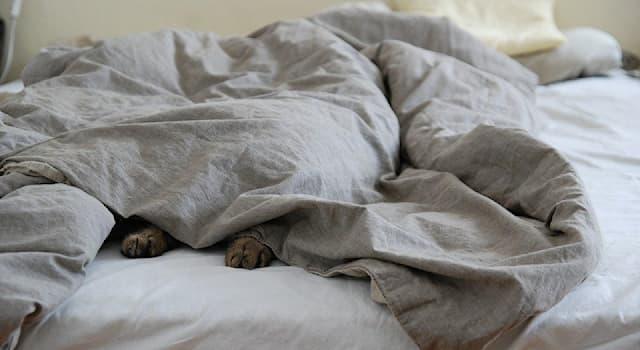 Общество Вопрос: Кому принадлежит крылатая фраза: «Я не вылезу из постели меньше, чем за десять тысяч долларов»?