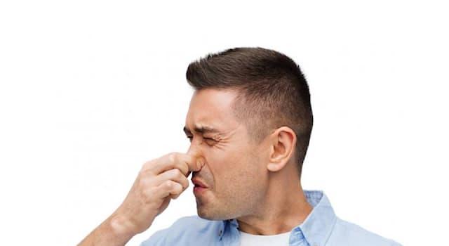 """Природа Вопрос: Название какого животного переводится с латинского как """"плохой запах""""?"""