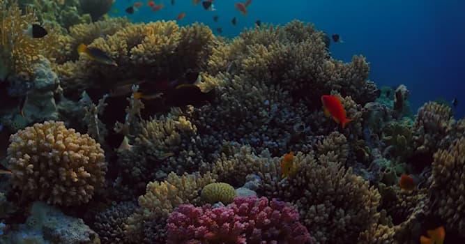 Природа Вопрос: Они очень умные, настоящие аристократы, частые герои морских мифов, отдают жизни за новые потомства. Что это?