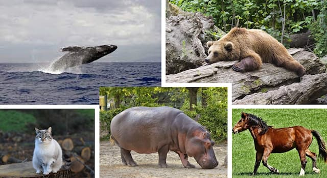 Природа Вопрос: С каким животным, по мнению учёных, бегемот имеет наиболее близкое родство?