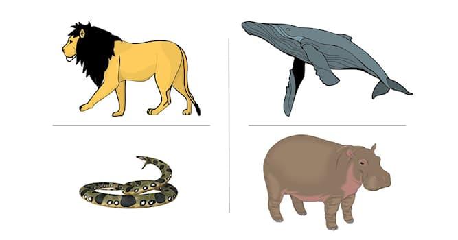 Природа Вопрос: Самка какого животного может закусить самцом во время брачных игр?