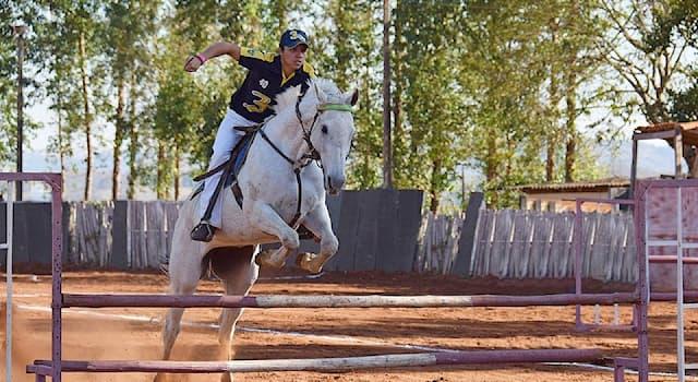 Спорт Вопрос: Сколько дней требуется для проведения соревнований по конному троеборью?