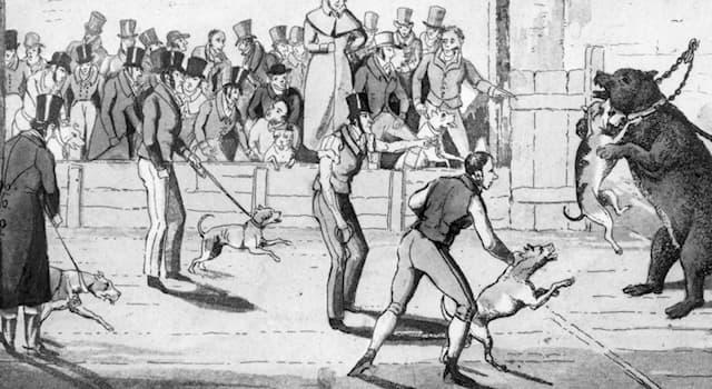 История Вопрос: У какого народа британцы позаимствовали традицию устраивать травлю различных животных?
