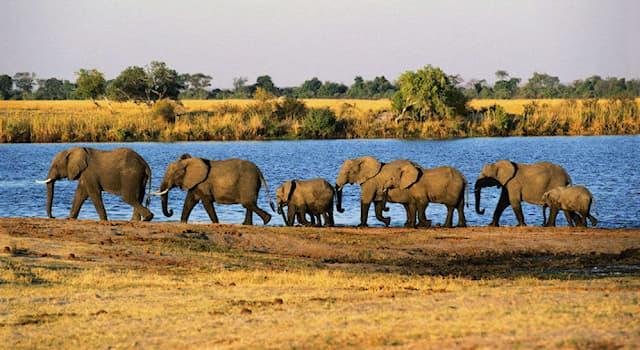 География Вопрос: В какой из стран Африки находится национальный парк по охране животных, называемый Чобе?