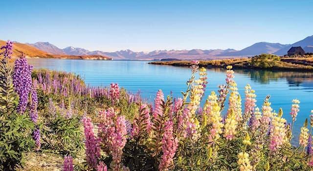 География Вопрос: В какой из стран мира находится это озеро, называемое Текапо, что в переводе означает «циновка для сна»?