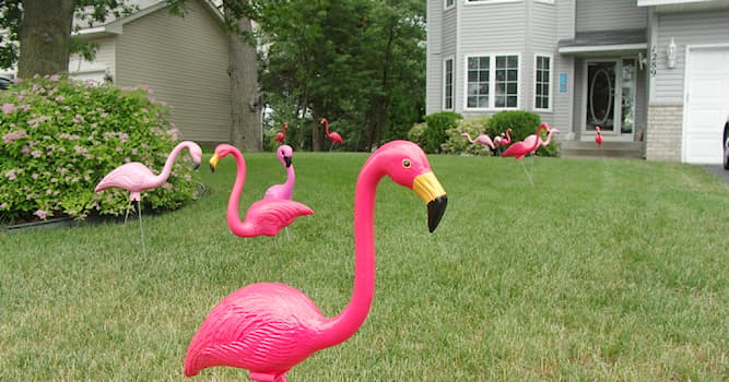 Society Trivia Question: In which country are plastic flamingos a popular lawn ornament?