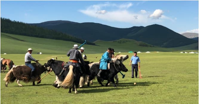 Sport Trivia Question: What animals are played in polo in Mongolia?