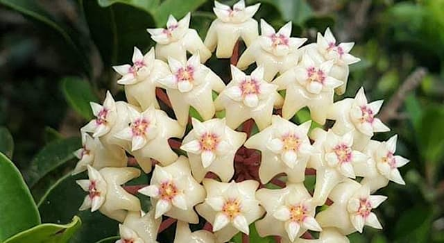 Nature Trivia Question: What type of flowering plant is pictured below?