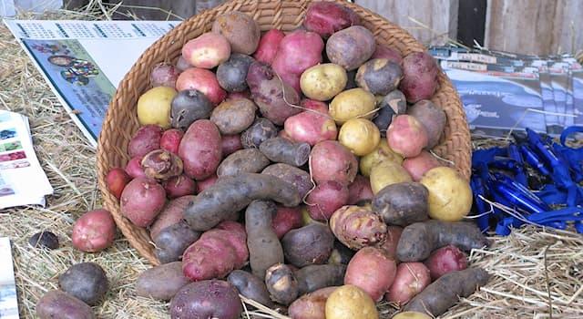 Culture Trivia Question: Where is the International Potato Center located?