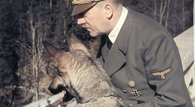 History Trivia Question: Which one of these dogs belonged to Adolf Hitler?