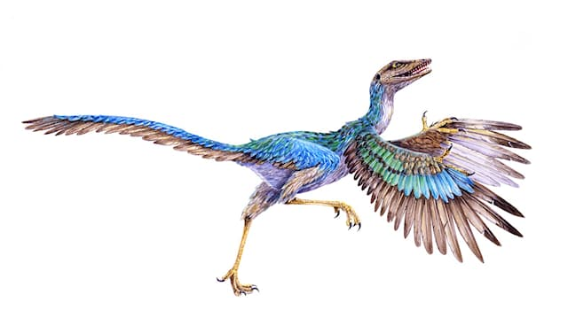 Nature Trivia Question: Which skeletal part was a key element in showing that birds are descended from dinosaurs?