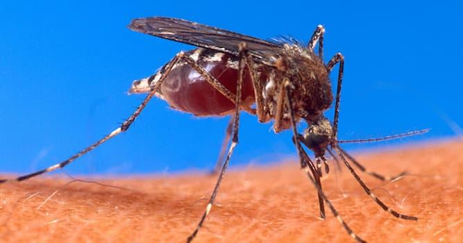 Природа Вопрос: Зачем комары пьют кровь?