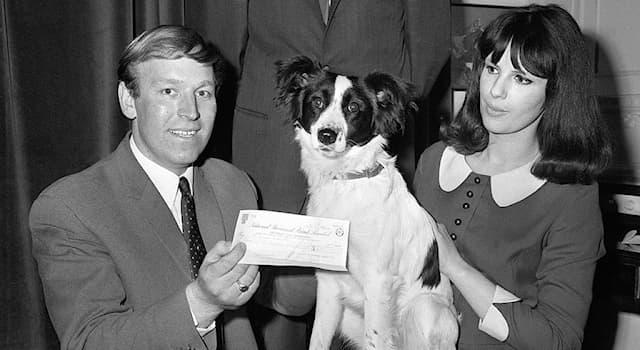 Спорт Вопрос: Что прославило собаку по кличке Пиклз в 1966 году?