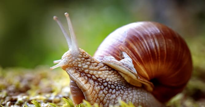 Nature Trivia Question: How long can snails sleep for?