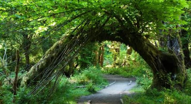 Geography Trivia Question: In which of the following countries can you find the Hoh Rainforest?